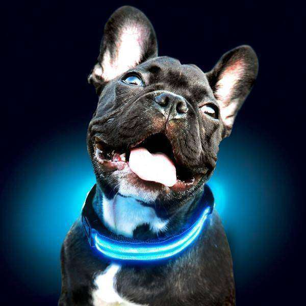Collier lumineux à Led -  - Lovely bouledogue