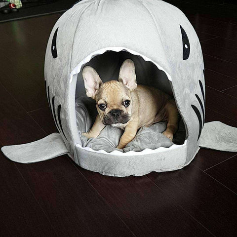 Image of Panier en forme de requin - Gris / S - Lovely bouledogue