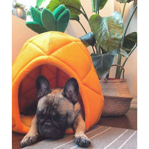 Image of Panier Ananas -  - Lovely bouledogue