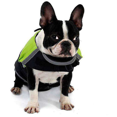 Gilet de sauvetage -  - Lovely bouledogue