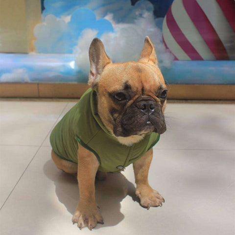 Image of Manteau d'hiver - Chaud et confortable -  - Lovely bouledogue