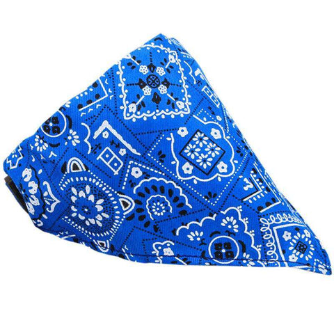 Bandana -  - Lovely bouledogue