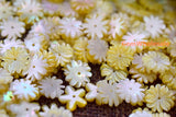 10PCS 10mm Natural yellow MOP Daisy flower,mother of pearl Daisy - Gemstone jewelry beads supplier