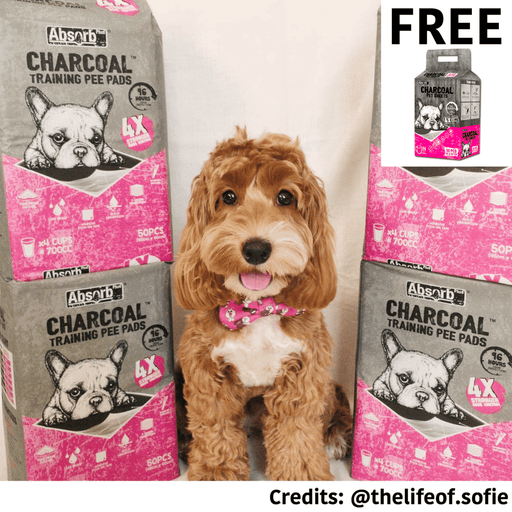 [PAWSOME DEAL] <b>BUY 1 FREE 1: </b> Absolute Pet Absorb Plus Charcoal Small/Medium/Large Pet Sheets