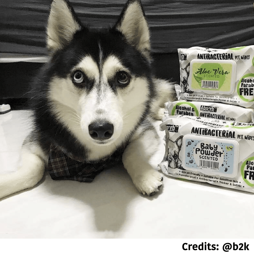 [PAWSOME DEAL] <b>3 FOR $11: </b> Absolute Absorb Plus Anti Bacterial Pet Wipes