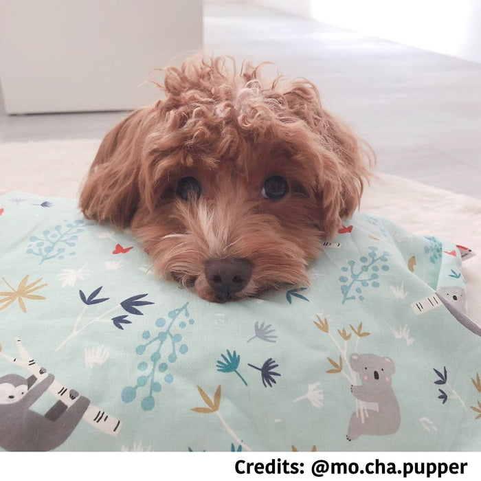[EXCLUSIVE] Hi 5 Paws Cuddles (Mint) Pet Pillow