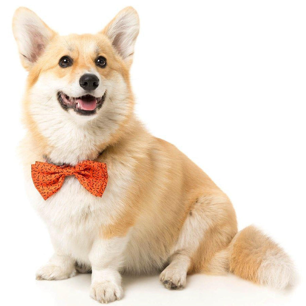 <b>15% OFF:</b> FuzzYard Orange Pet Bow Tie