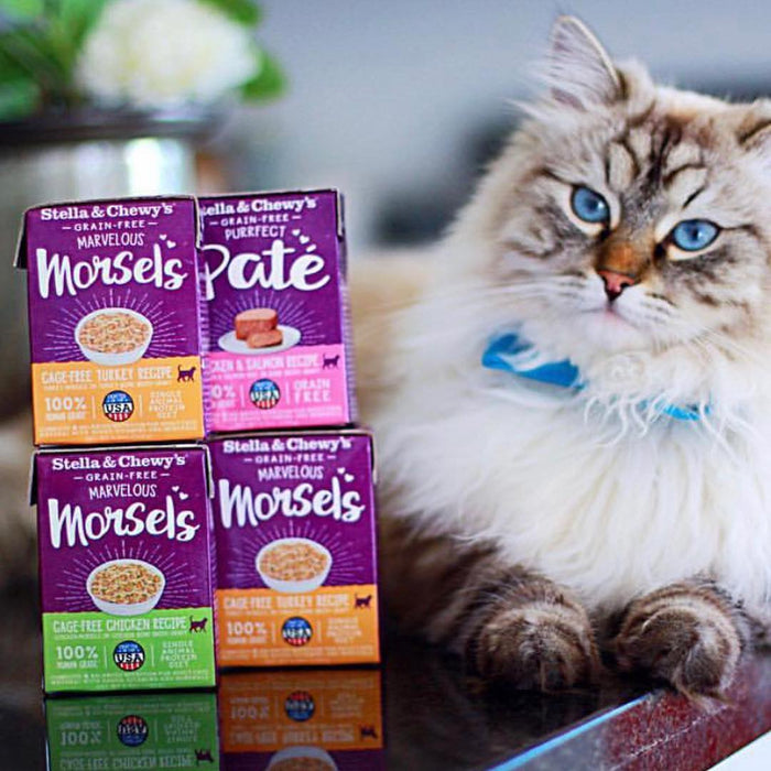 Stella & Chewy's Marvelous Morsels Grain Free Cage-Free Turkey Recipe Wet Cat Food