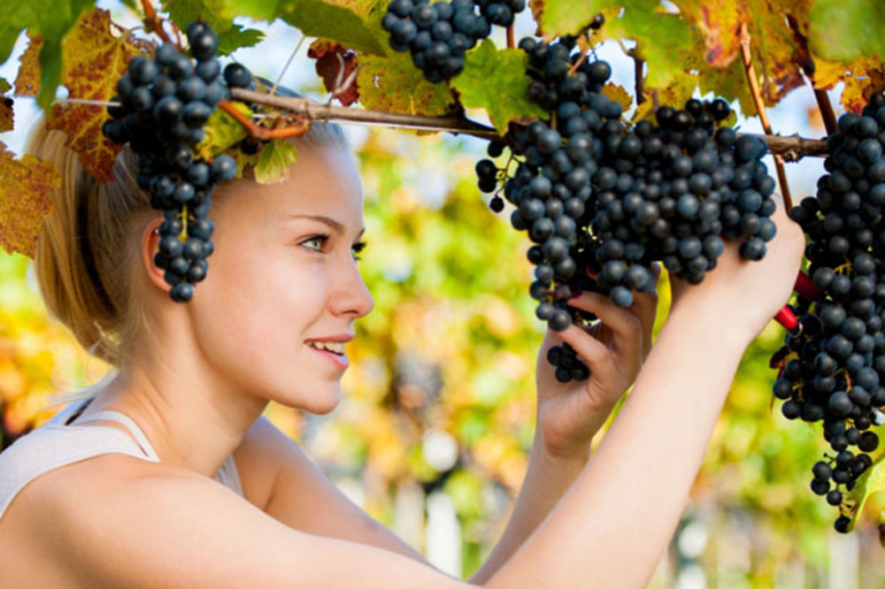 Regenerate the skin with grapes