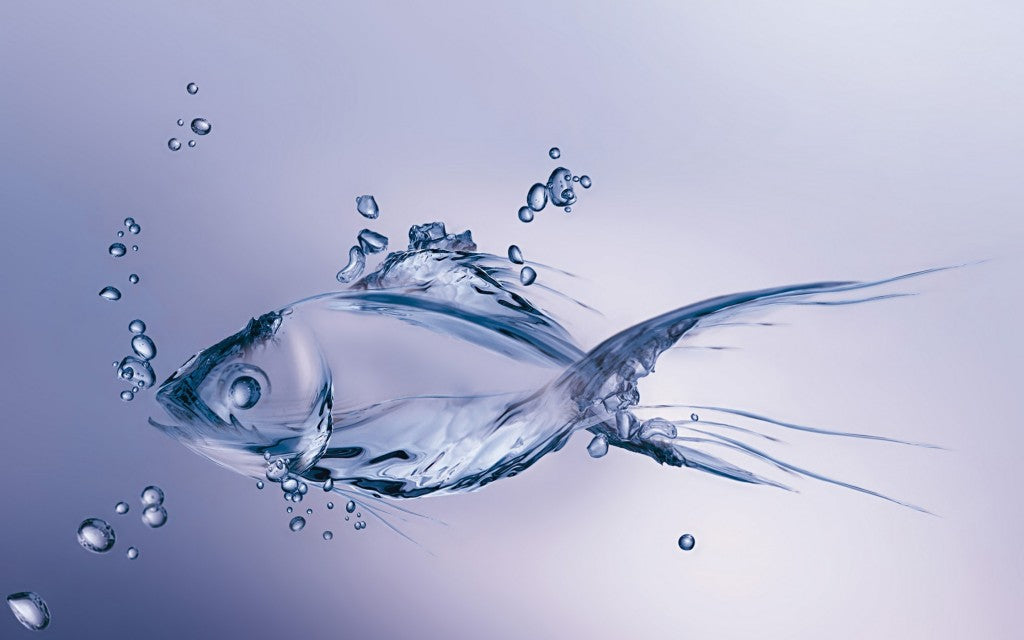 Fish collagen - an antioxidant powerhouse