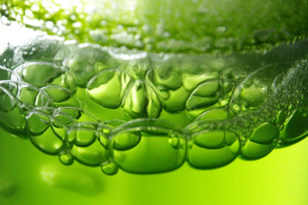 Why the algae oil is beneficial for the skin?