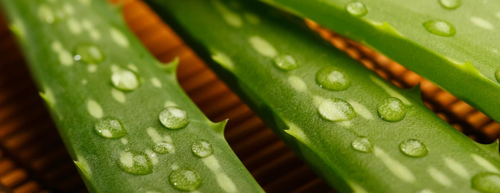 The benefits of the aloe vera for the skin