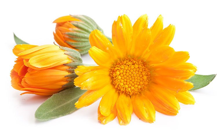 Calendula- a magical herb in the skin care world!