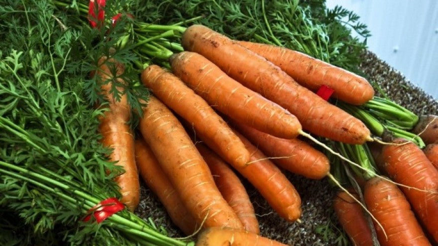 The wonders of the carrot for the skin