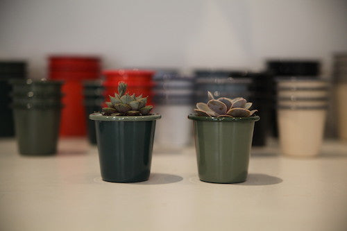 How to... plant Cacti Falcon Planters