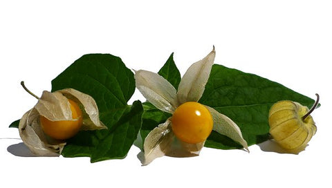 Physalis, good berries, gold berries