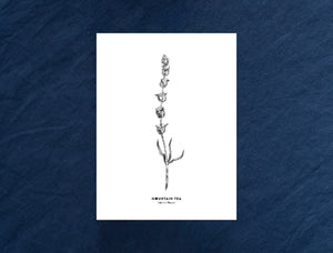 New Herb illustrations | Postcard - Wholesale