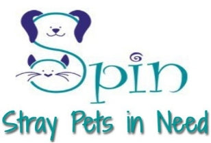 Massachusetts - Stray Pets in Need