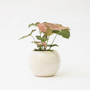 Speckle Ball Planter