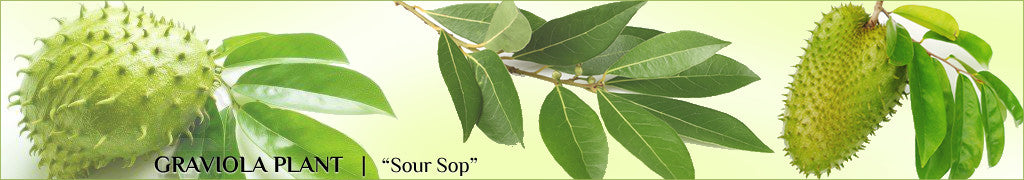 "<img src=""https://cdn.shopify.com/s/files/1/1622/0281/files/myicon.png?7122497739757913995"">    