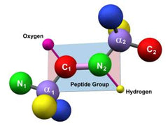 Peptide group