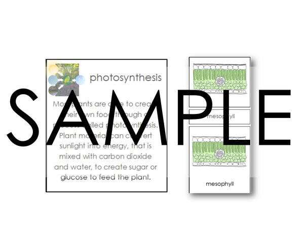 Montessori PDF Cross Section of a Leaf & Photosynthesis Charts, 3 Part Cards & Definitions