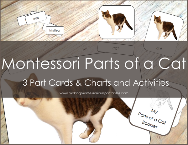 Montessori Parts of a Cat 3 Part Cards and Charts Activity Set