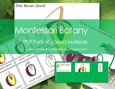 Montessori Botany Parts of a Seed PDF Puzzle, Activity Set, 3 Part Cards, Germination Charts