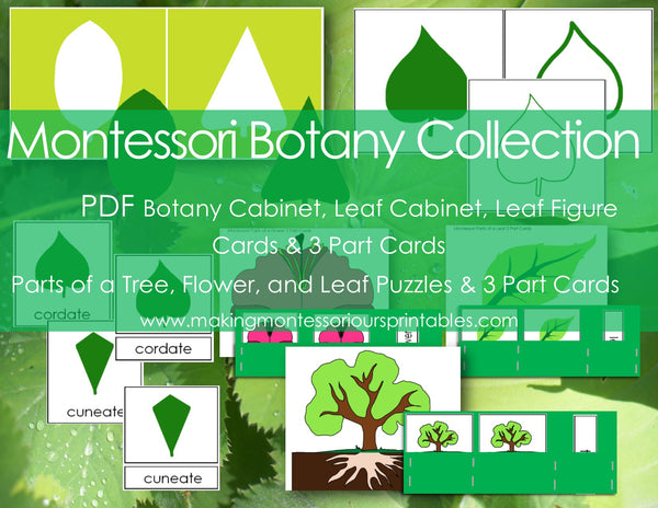 Montessori Botany Collection PDF /Printable Botany Cabinet /Printable Leaf Cabinet
