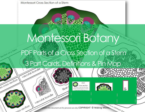Montessori PDF Parts of a Cross Section of a Stem, 3 Part Cards, Definitions & Pin Map