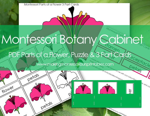 Montessori Botany Cabinet PDF Parts of a Flower 3 Part Cards & Puzzle and Activity Labeling Set