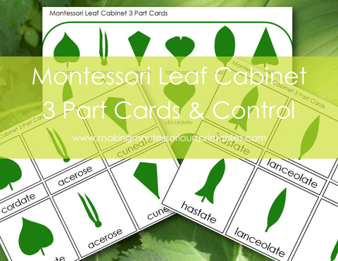 Montessori leaf Cabinet 3 Part Cards PDF