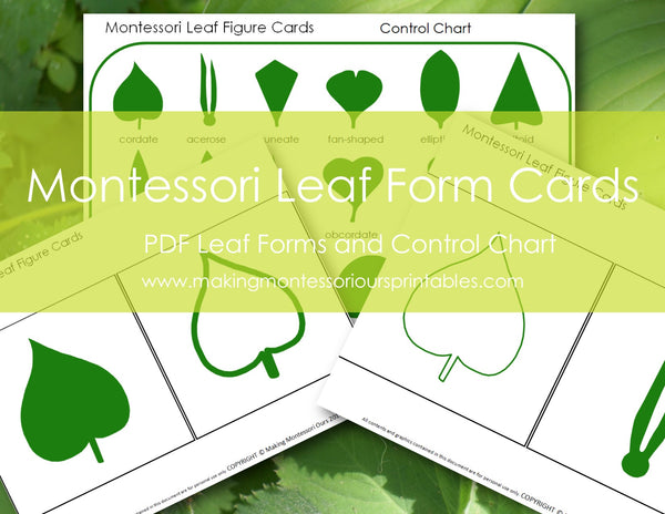 Montessori Leaf Cabinet Figure Cards