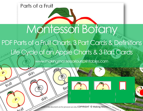 Montessori PDF Parts of a Fruit Charts, 3 Part Cards & Definitions, Apple Life Cycle Charts & 3 Part Cards