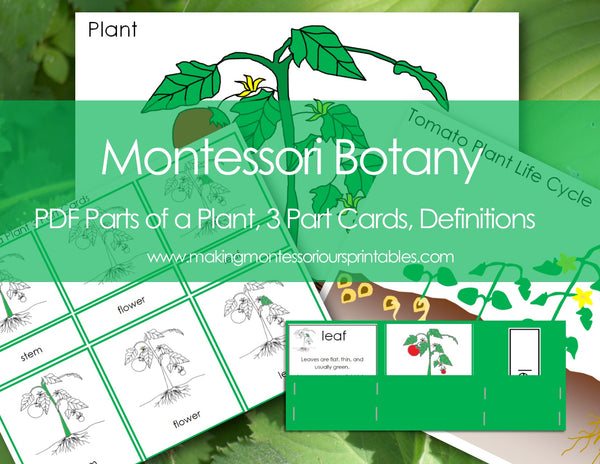Montessori Botany Parts of a Plant Charts, 3 Part Cards, Labels, Life Cycle Charts, Definition Cards, Tomato Life Cycle Charts & Labels