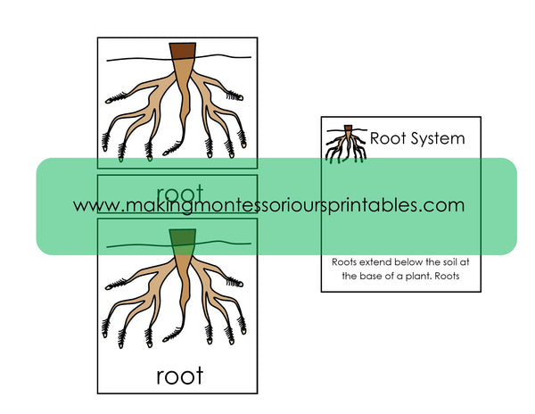 Montessori Parts of a Root PDF Puzzle, 3 Part Cards & Definition Cards