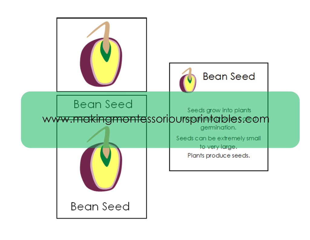 Montessori botany parts of a seed pdf puzzle activity set 3 part montessori botany parts of a seed pdf puzzle activity set 3 part cards pooptronica Images