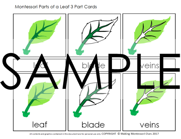 Montessori Botany Cabinet PDF Parts of a Leaf 3 Part Cards & Puzzle and Activity Labeling Set