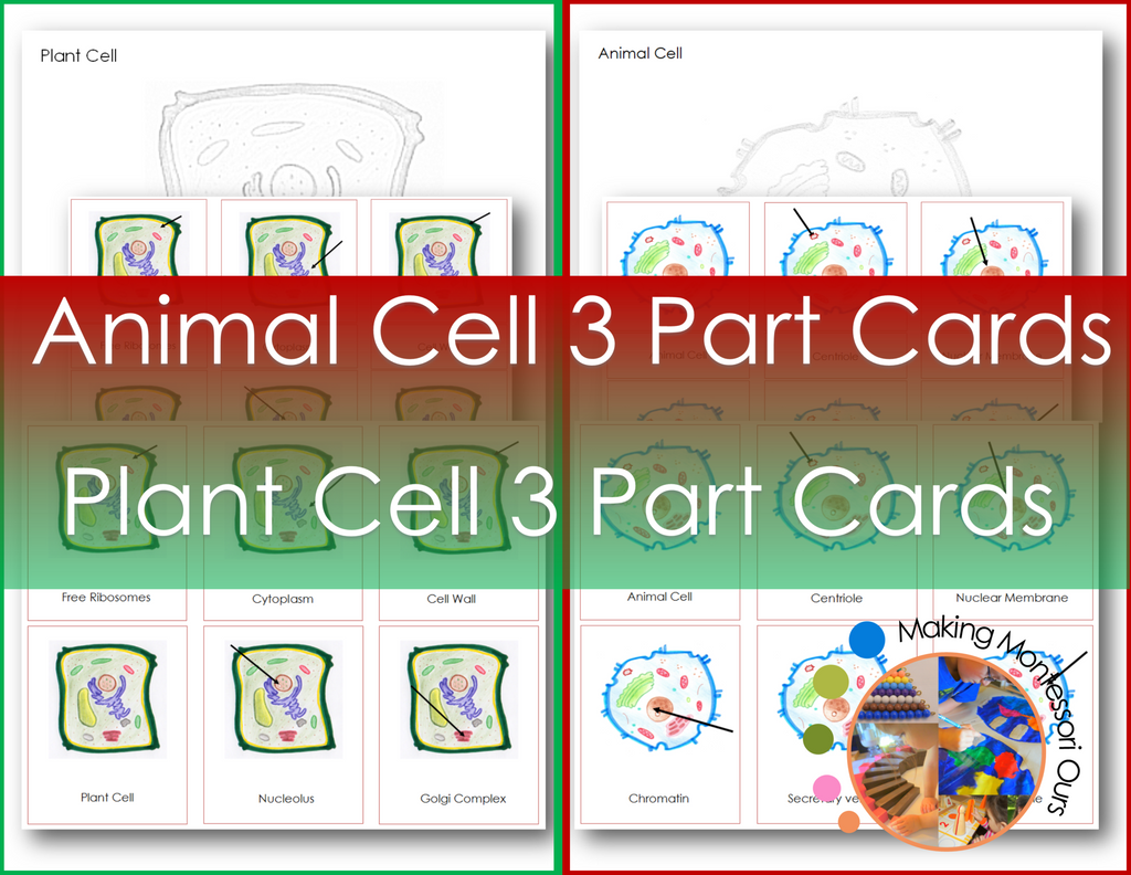 Montessori Animal & Plant Cell 3 Part Cards and Colouring Pages