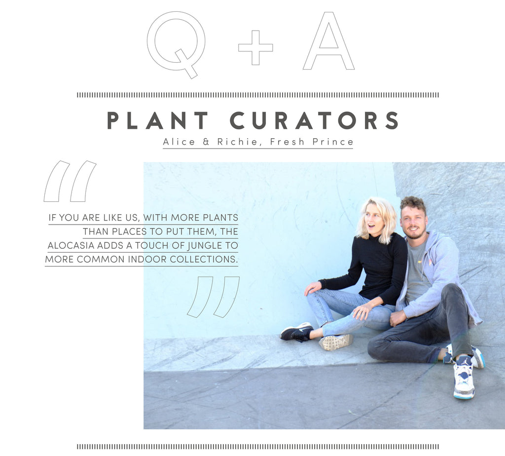 Plant curators: Alice + Richie, Fresh Prince