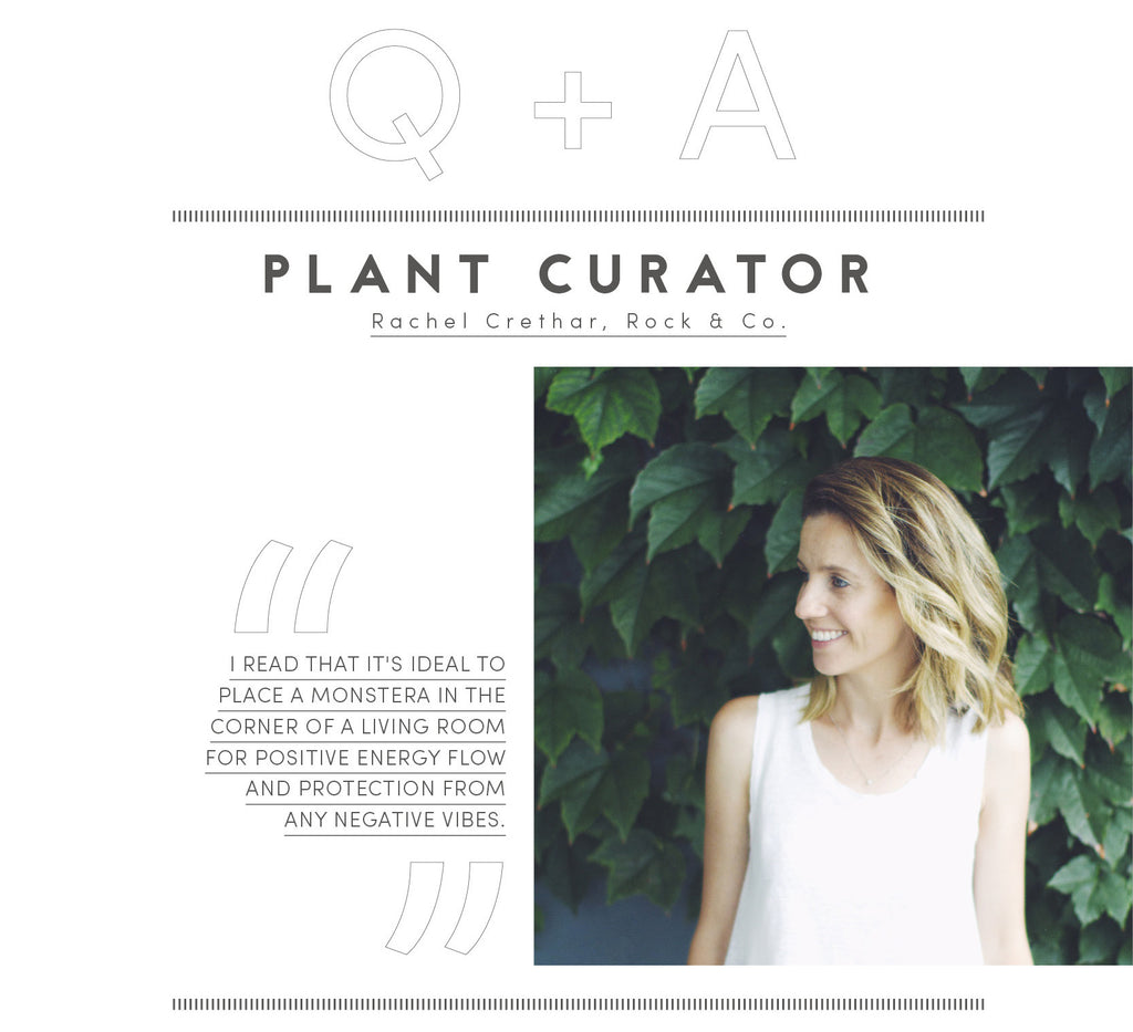 Plant curator: Rachel Crethar of Rock & Co