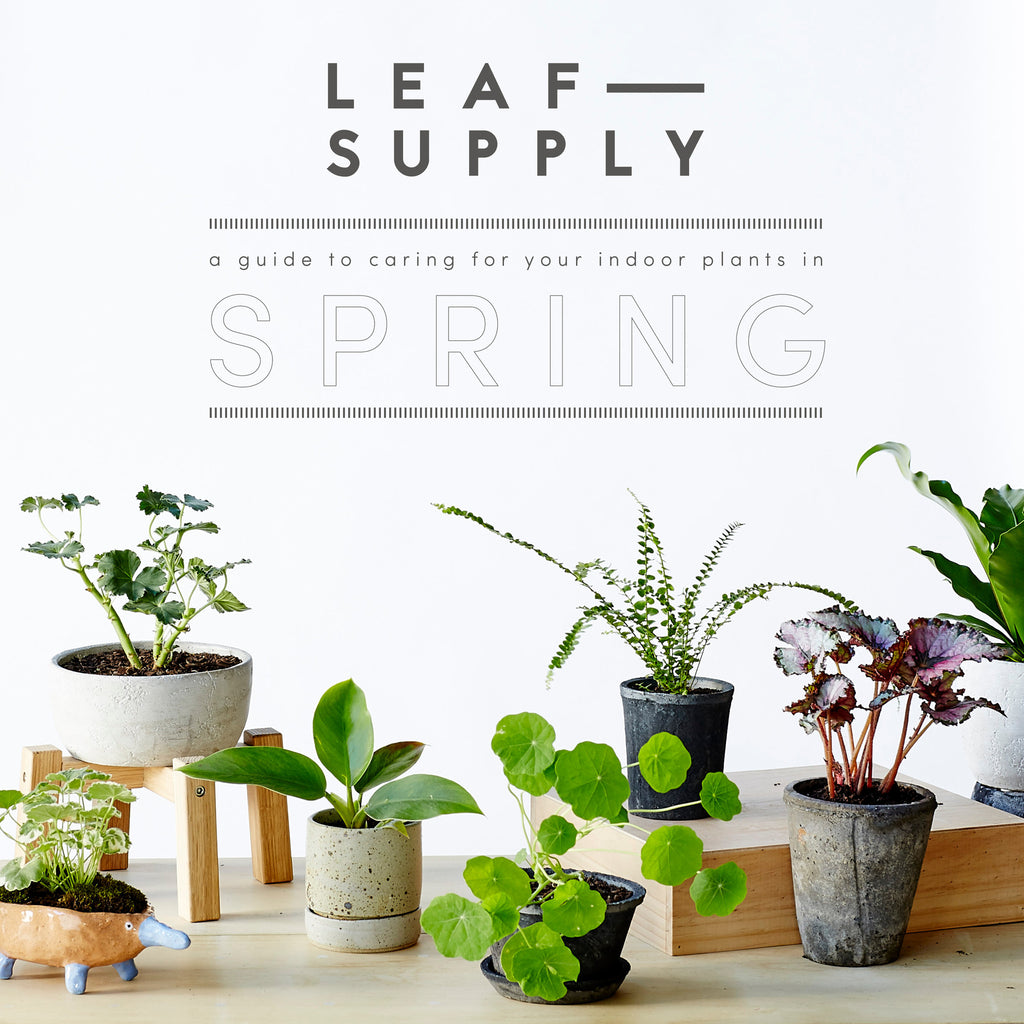 SPRING PLANT CARE GUIDE