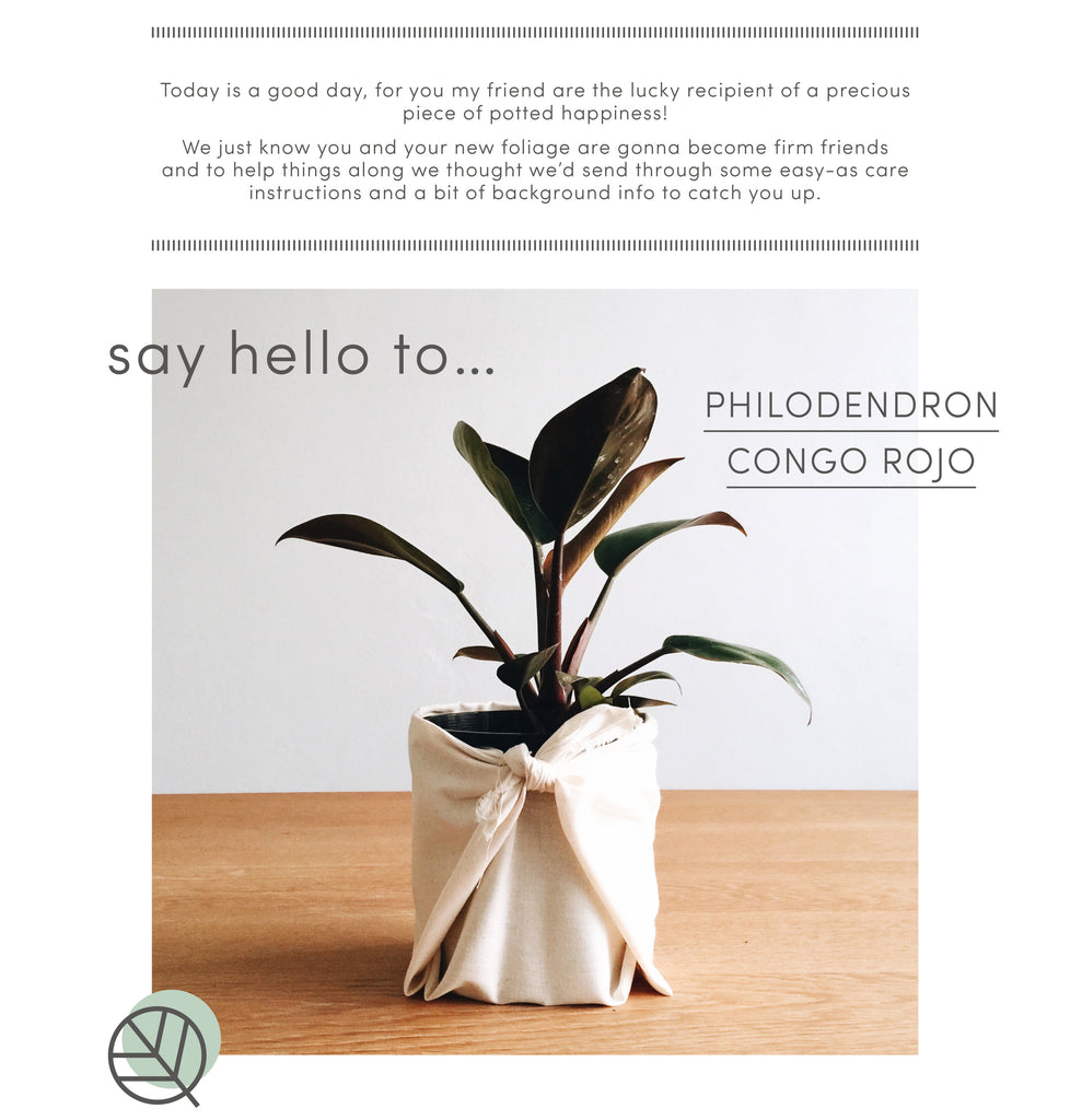 How to care for philodendron congo rojo