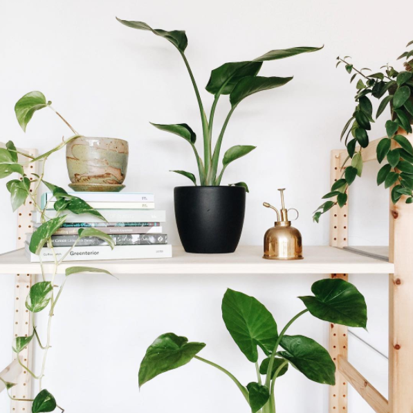 Indoor plant shelfie