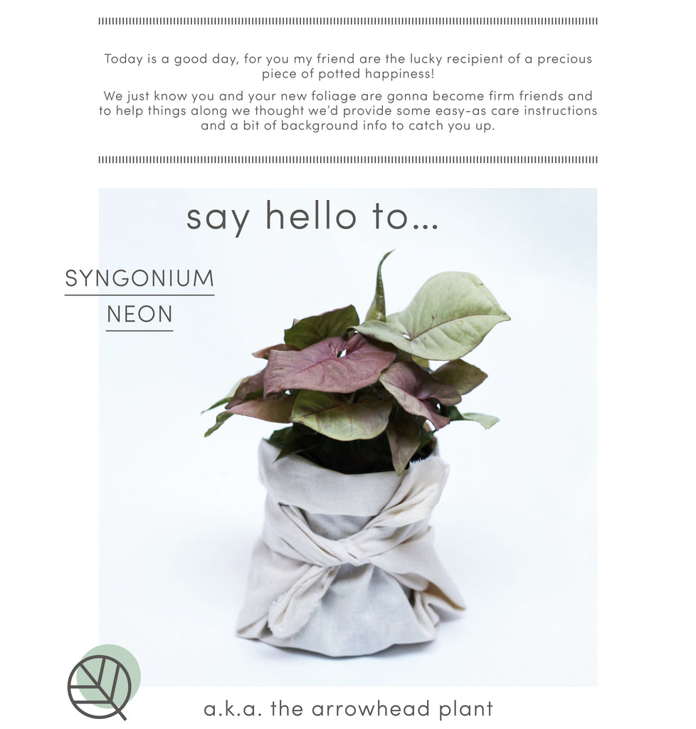 How to care for Syngonium Neon
