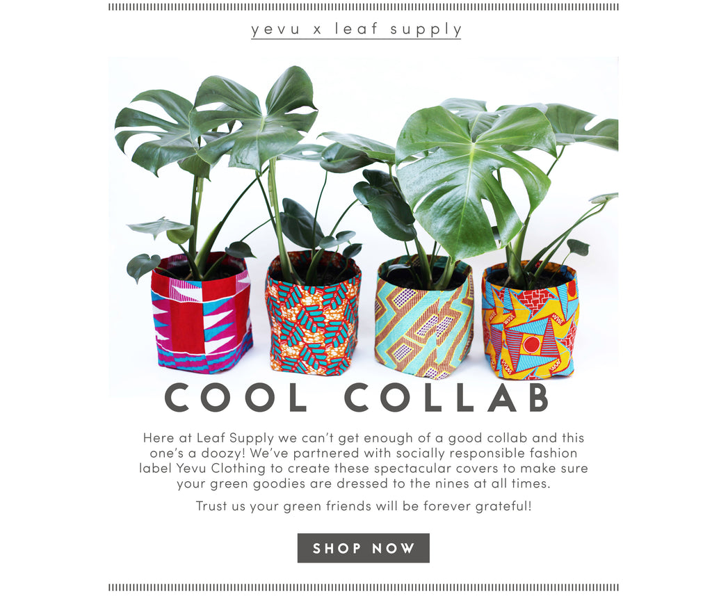 leaf supply x yevu clothing collab