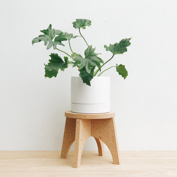Cork plant stand