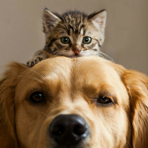 Cats | Dogs | Animals