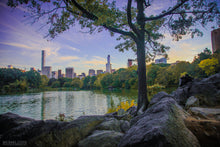 """CENTRAL PARK"" archival photo print by Michael Cuffe - OPEN EDITION - 8.5"" x 11"""