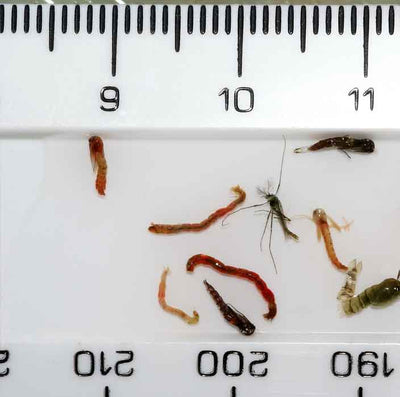 400 species of Chironomid. What to use?